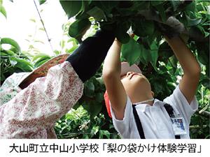 大山町中山小学校「梨の袋かけ体験学習」